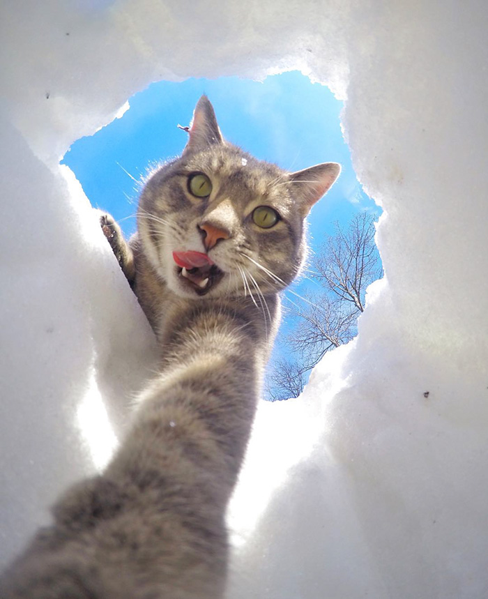 manny-cat-takes-selfies-02