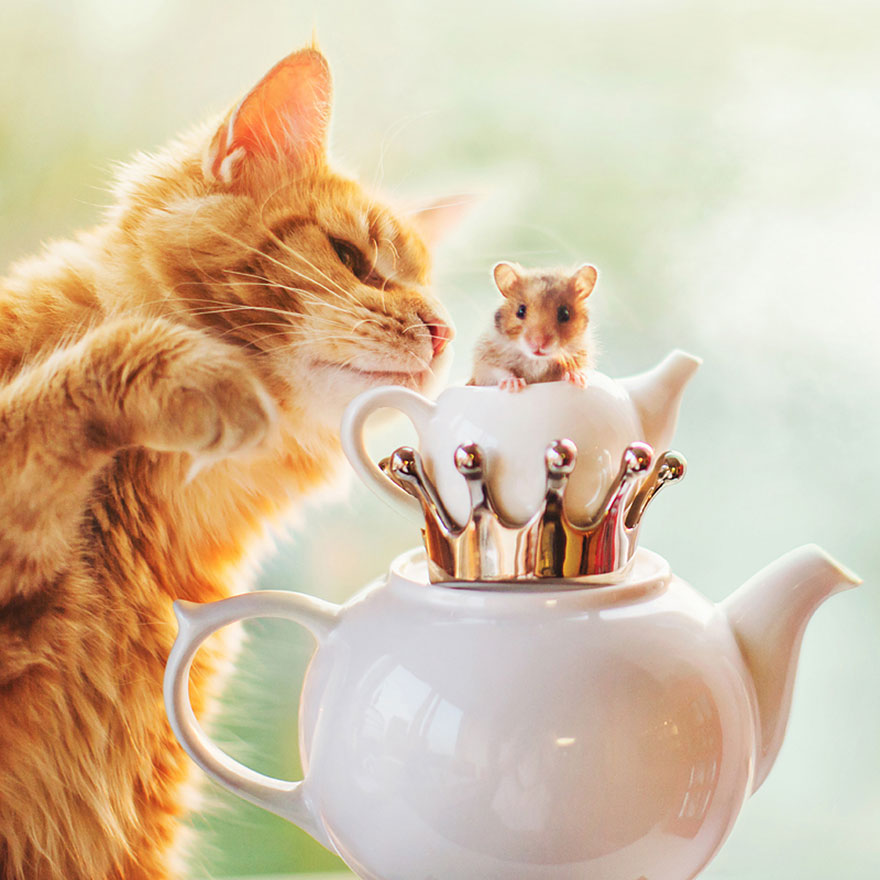 Cutlet The Ginger Cat Is So Majestic He Even Has His Own Hoomin Photographer-13