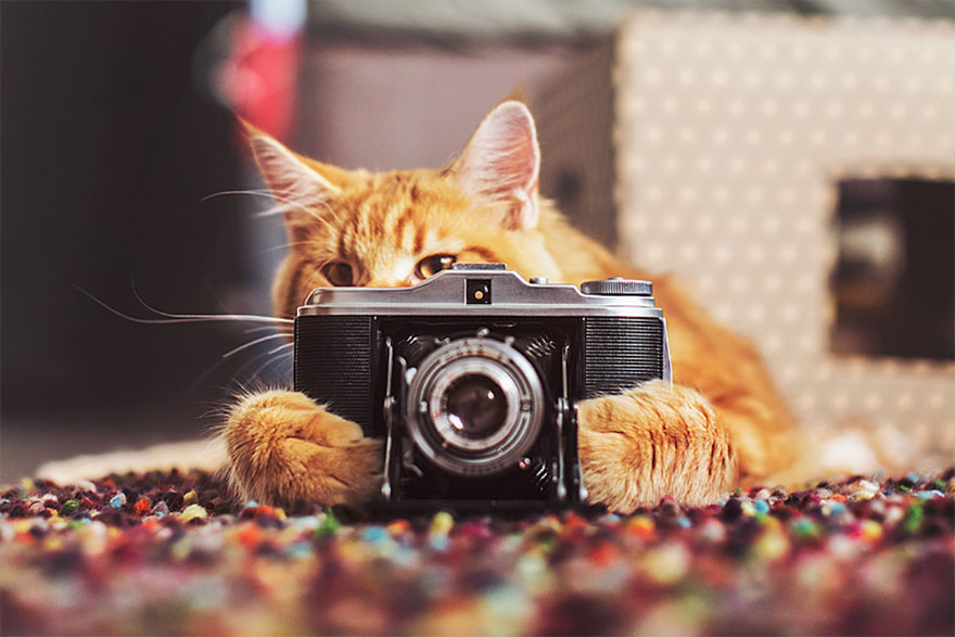 ginger-cat-photography-kotleta-cutlet-kristina-makeeva-hobopeeba-13