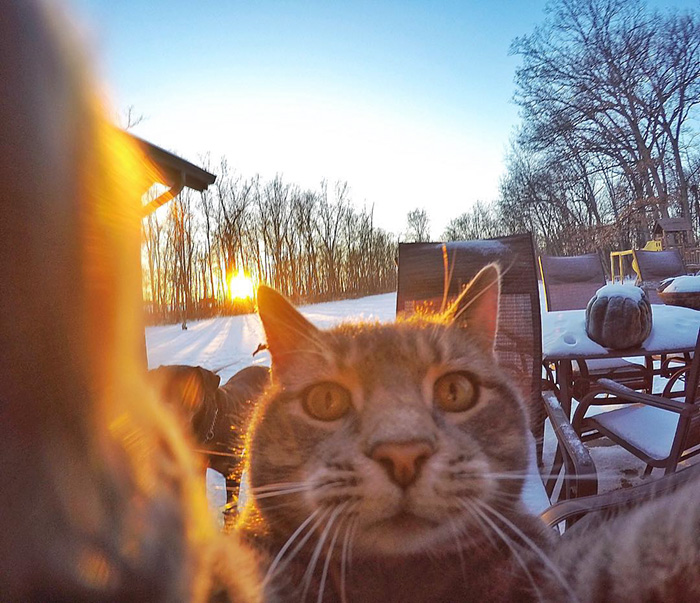 manny-cat-takes-selfies-005