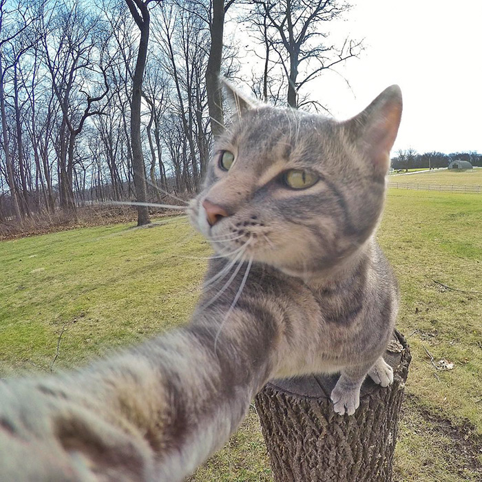 manny-cat-takes-selfies-06