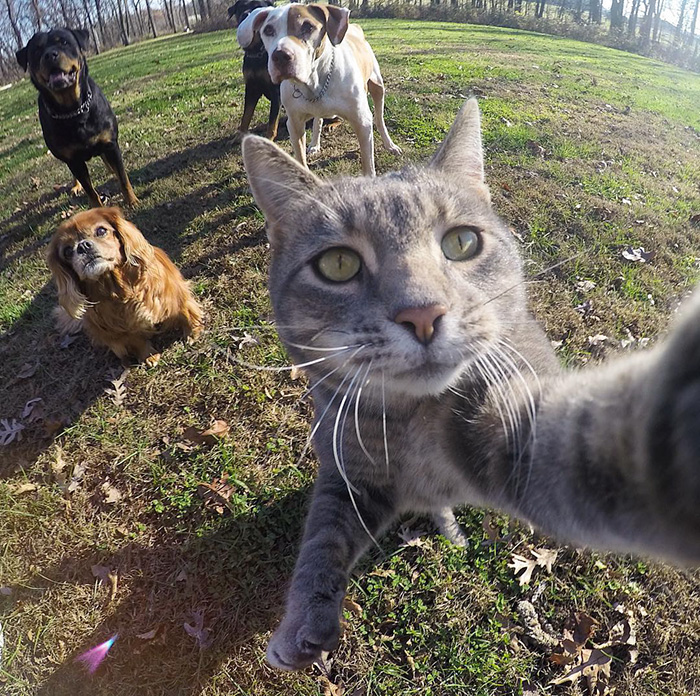 manny-cat-takes-selfies-07