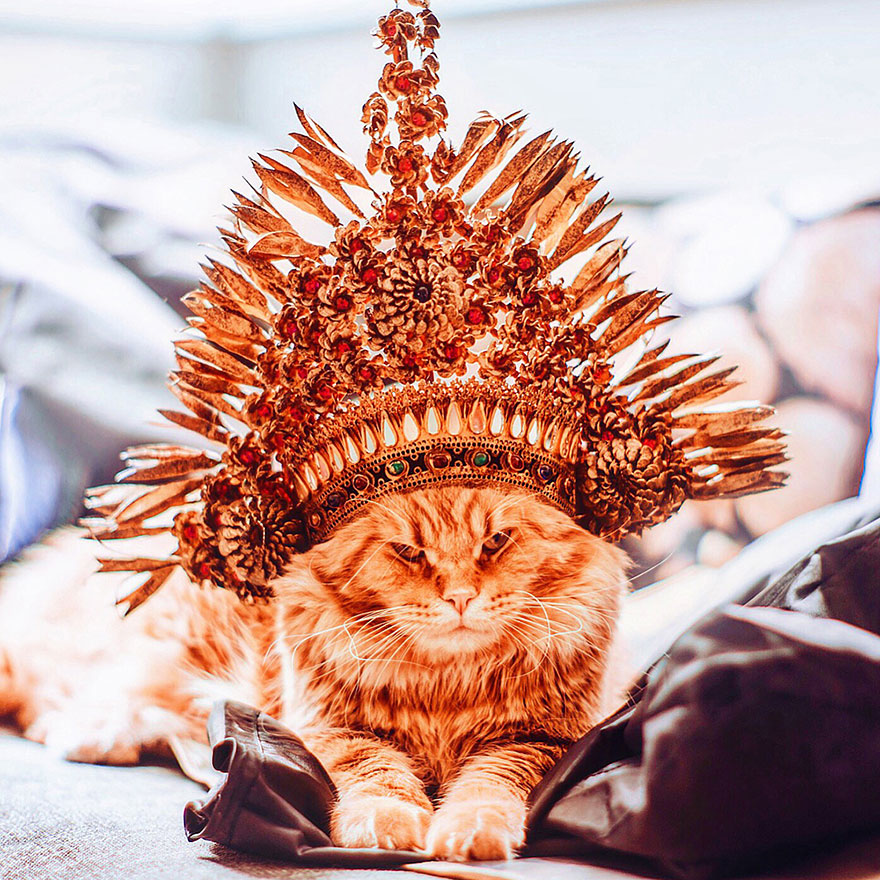 Cutlet The Ginger Cat Is So Majestic He Even Has His Own Hoomin Photographer-22