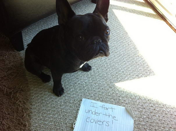 Dogshaming Tumblr Blog (Farting-Dog )