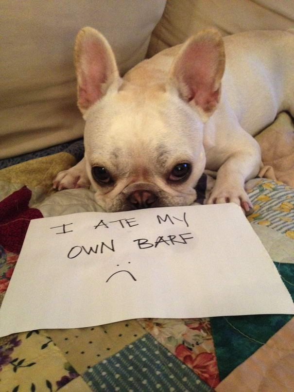 Dogshaming Tumblr Blog (Hungry-Dog)