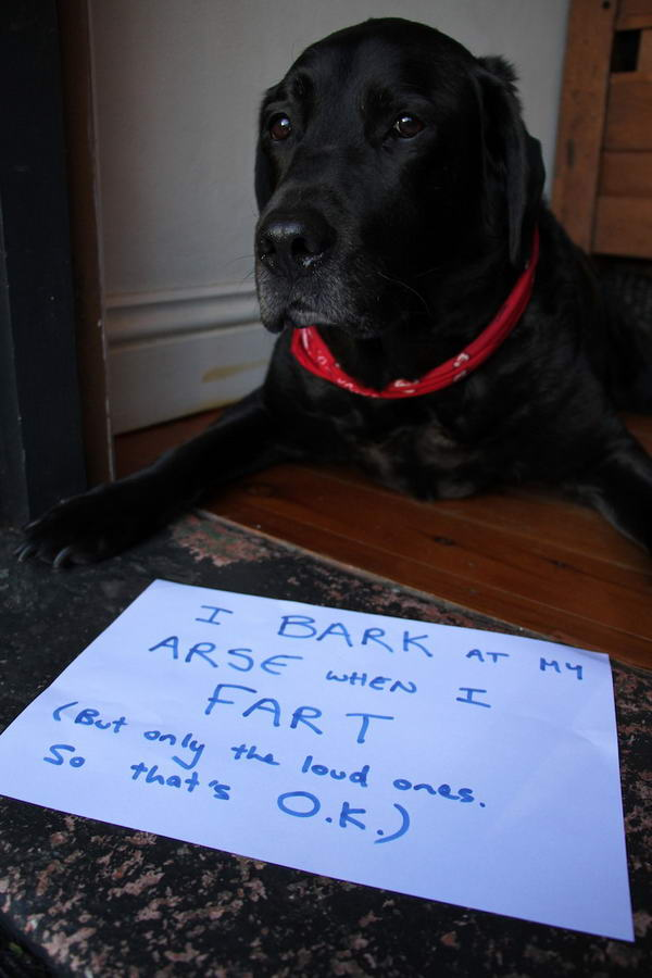 Dogshaming Tumblr Blog(Barking-Dog,)