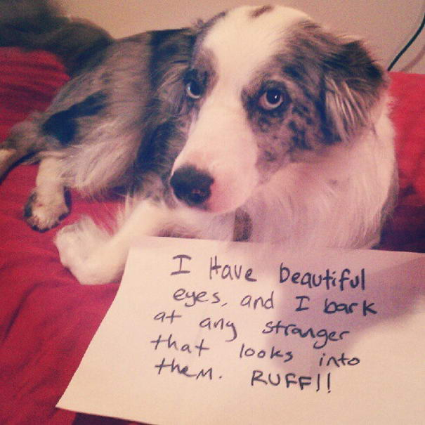 Dogshaming Tumblr Blog(Dog-With-Beautiful-Eyes)