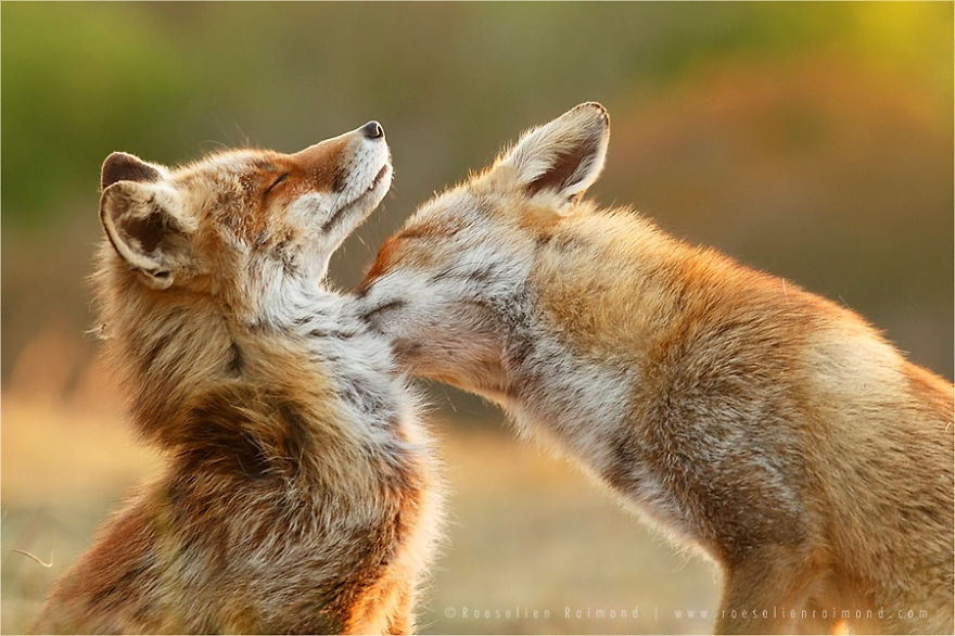 Talented Dutch photographer Roeselien Raimond 04