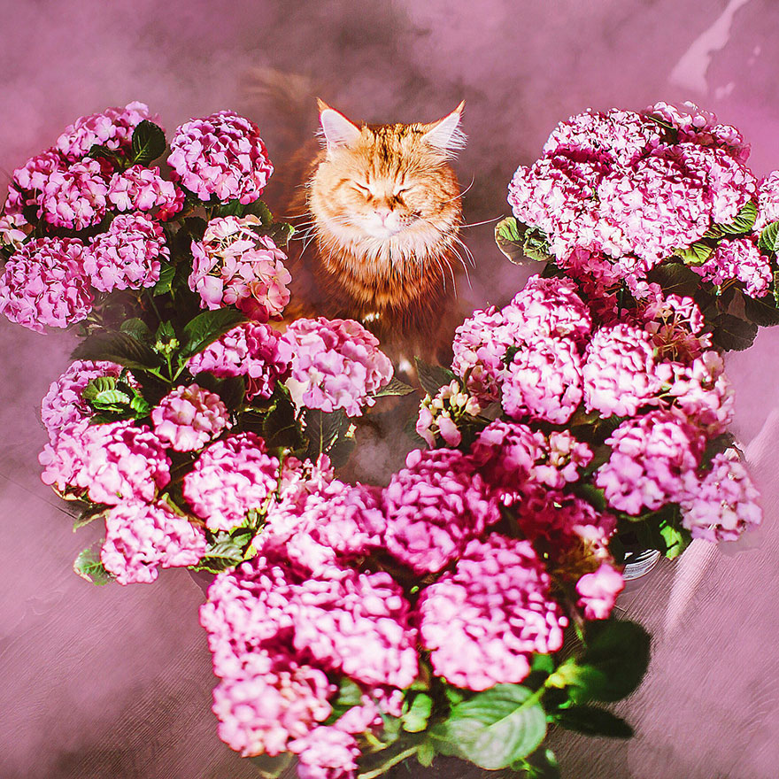 ginger-cat-photography-kotleta-cutlet-kristina-makeeva-hobopeeba-15