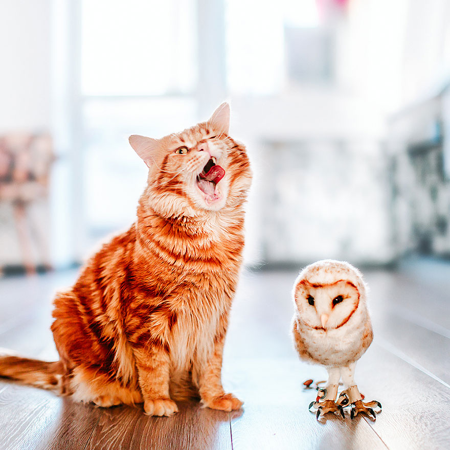 ginger-cat-photography-kotleta-cutlet-kristina-makeeva-hobopeeba-27