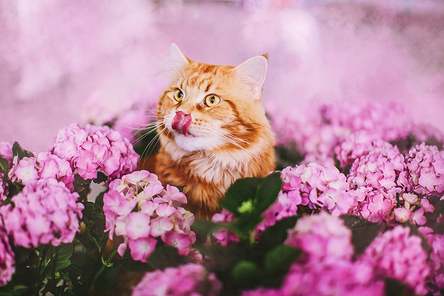 ginger-cat-photography-kotleta-cutlet-kristina-makeeva-hobopeeba-28