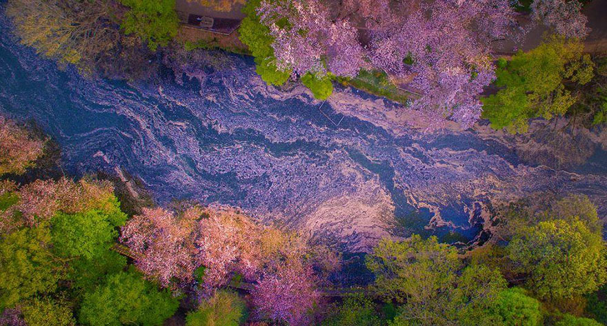 sakura-cherry-blossom-drone-photography-danilo-dungo-japan-2_855