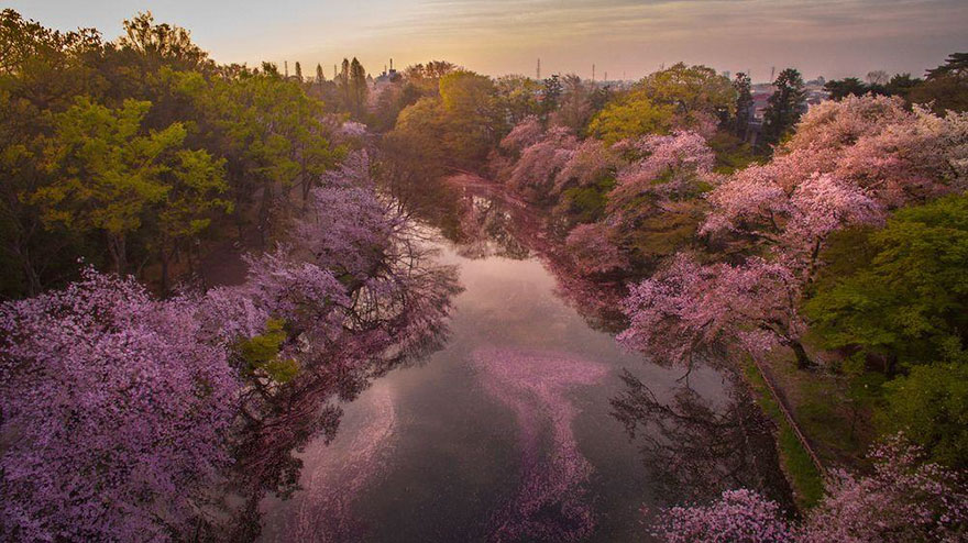 sakura-cherry-blossom-drone-photography-danilo-dungo-japan-5_855