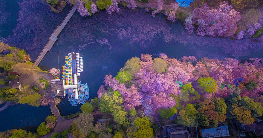 sakura-cherry-blossom-drone-photography-danilo-dungo-japan-6_855